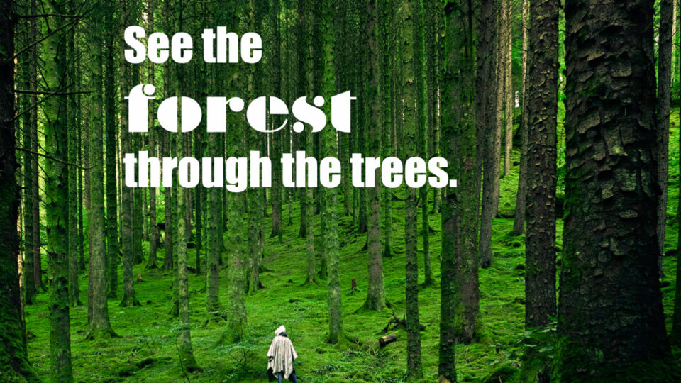 See the forest through the trees